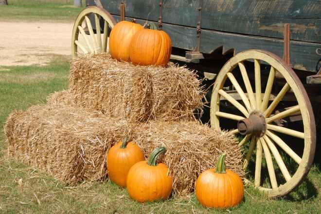 Pumpkins pexel
